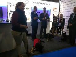 Eschenbach dogs
